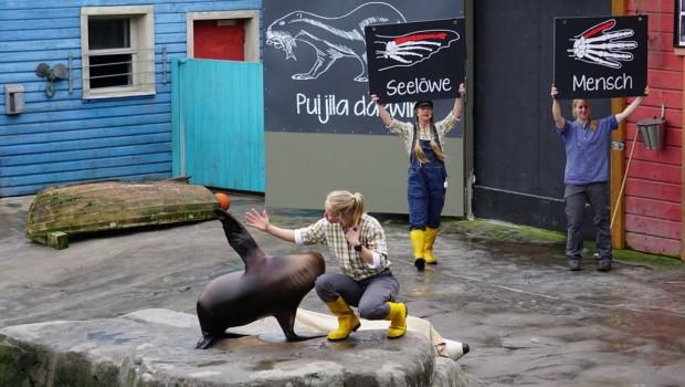 Robbenshow Zoo Hannover