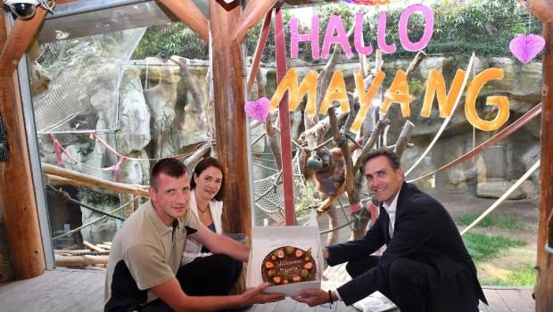 Zoo Rostock Orang-Utan Mayang