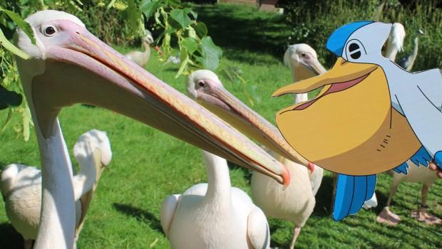 Zoo Osnabrück Pokémon Go-Abend 2018