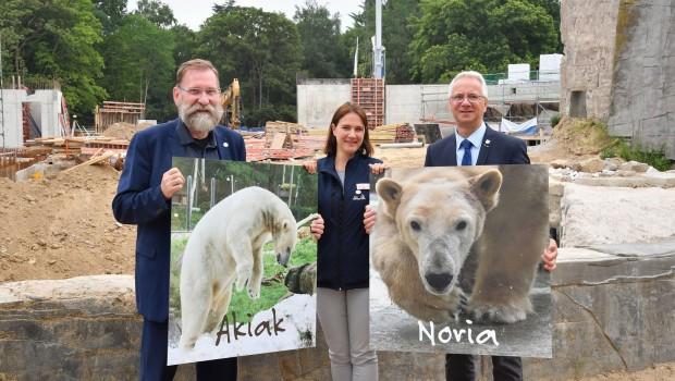 Zoo Rostock Eisbären 2018 Vorstellung