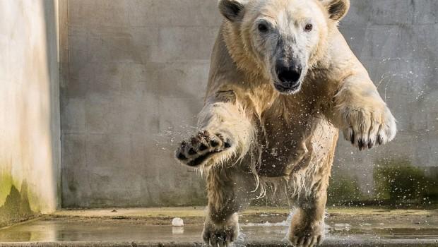 Zoo Rostock Noria Wasser