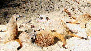 Zoo Aschersleben: Freier Eintritt am 30. Juli 2018 möglich