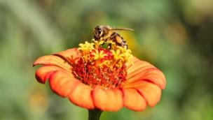 """Landeszooverband veranstaltet 8. Landeszootag am 4. Juli 2018 unter dem Motto """"Hummel, Biene & Co – Insekten auf der Spur"""""""
