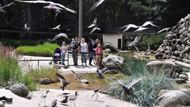 Zoo Rostock Seevogel-Voliere neu 2018