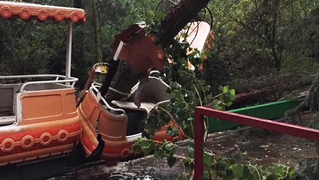 Erse Park Hochbahn Gondel Unfall Baum