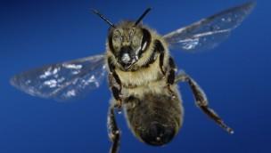 """Zoo Rostock: Einzigartige Fotoschau """"Bienen – Die Bestäuber der Welt"""" zeigt Fleißarbeiter ganz nah"""