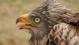 Münchner Tierpark Hellabrunn übernimmt Patenschaft für Rotmilane