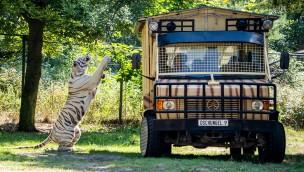 """Serengeti-Park neu mit """"Raubtier-Safari"""": Hautnah bei Raubtierfütterungen dabei"""