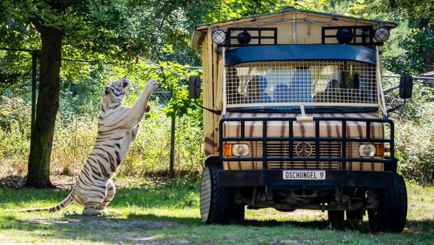 Serengeti-Park Raubtier-Safari