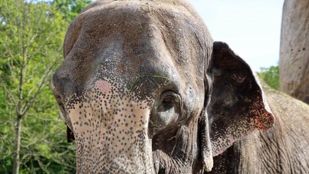 Elefant Lina im Zoo Karlsruhe