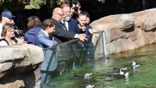 """""""Polarium"""" im Zoo Rostock ist offiziell eröffnet: 200 Tiere in neue Erlebniswelt eingezogen"""
