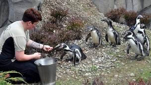 POLARIUM Zoo Rostock Pinguine neu