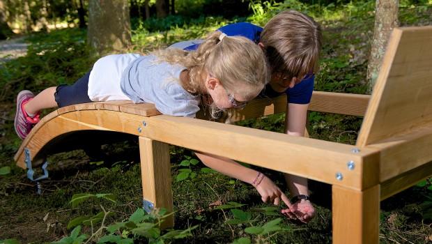 Ameisen Skywalk Allgäu Waldgeschichten