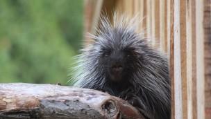 """Neue Tierwelt """"Manitoba"""" im Zoo Osnabrück fast fertig: Eröffnungstermin bekannt"""