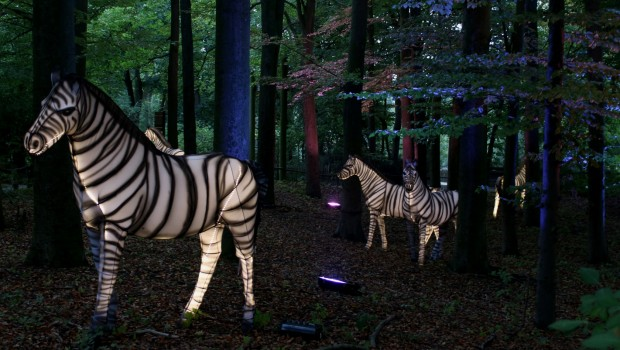 Zoo Osnabrück Zoo Lights Zebras