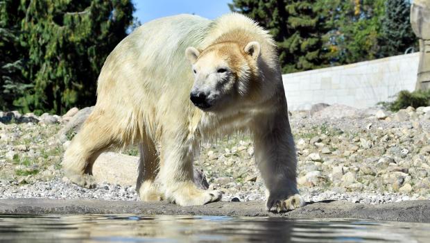 Zoo Rostock Eisbär Noria