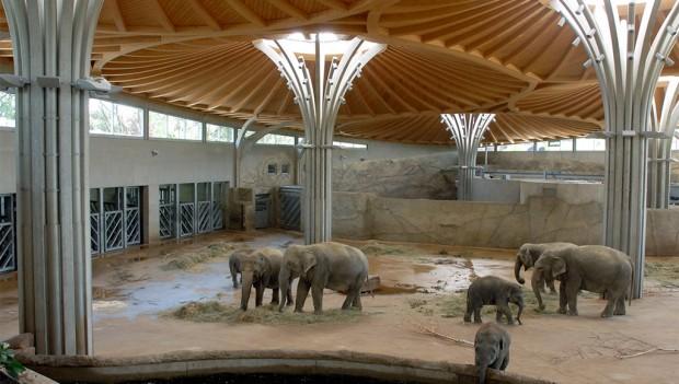 Innengehege Elefanten im Kölner Zoo