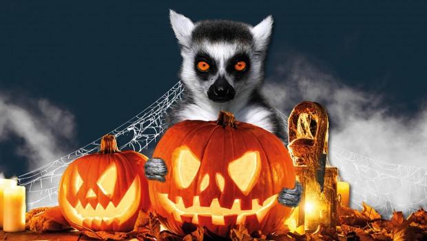 halloween-kürbisse-zoo