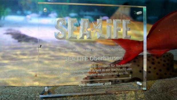 SEA LIFE Oberhausen Exzellentes Zentrum für Nachzucht