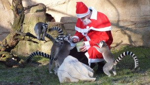 Tierpark Cottbus veranstaltet Nikolaus-Rundgang 2018 am 6. Dezember