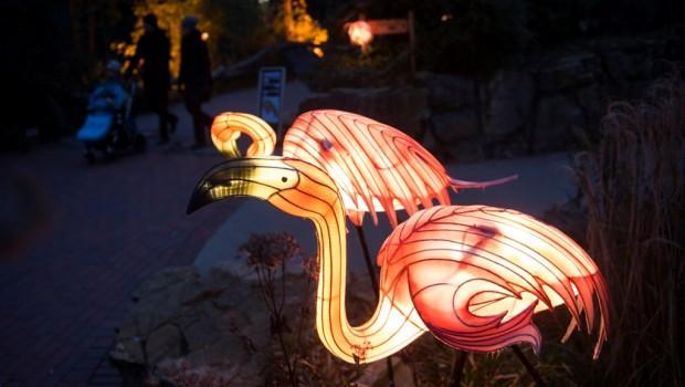 Zoo Osnabrück Zoo Lights 2018
