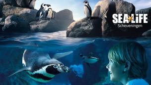SEA LIFE Scheveningen: Günstige Tickets für 9,99€ (statt 16,75€) mit 40% Rabatt sichern!