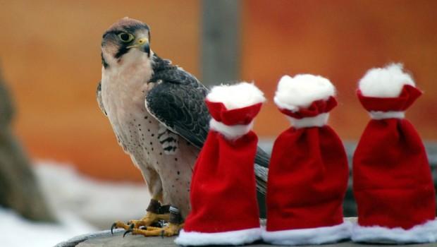 Weihnachten mit Greifvogel Erlebnis Zoo hannover