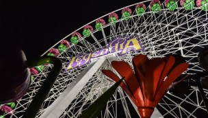 Winter Legendia Riesenrad Legendia Flower