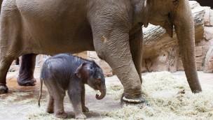 Elefantenbaby Zoo Leipzig 2019 Bilder