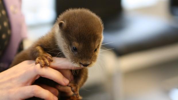 Otterbaby Handaufzucht Tier Freizeitpark THüle