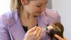 Tier- und Freizeitpark Thüle: So wird das Otter-Baby mit der Hand aufgezogen!