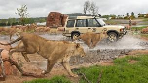 West Midlands Safari Park Auto