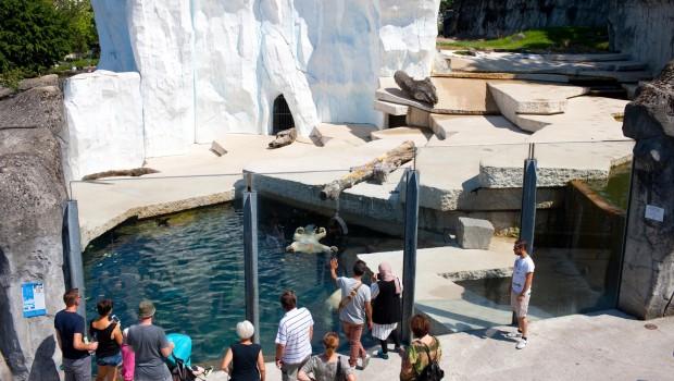 Zoo Karlsruhe Eisbären im Sommer