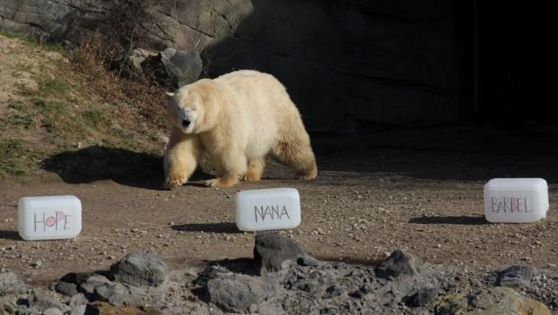 Eisbär Erlebnis-Zoo Hannover Pate Name