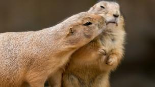 """Erlebnis-Zoo Hannover am Valentinstag 2019 mit 2-für-1-Aktion """"Bei Kuss ein Ticket gratis"""""""