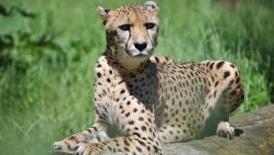 "Sonntagsführung im Zoo Rostock im Februar 2019 unter dem Motto ""Zoolympic"""