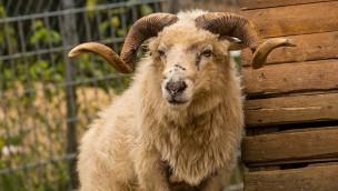 Tierpark Niederfischbach im Ticket-Angebot: Günstiger Eintritt mit 50 Prozent Rabatt!