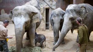 Zoo Leipzig Elefantenbaby 2019 trinkt