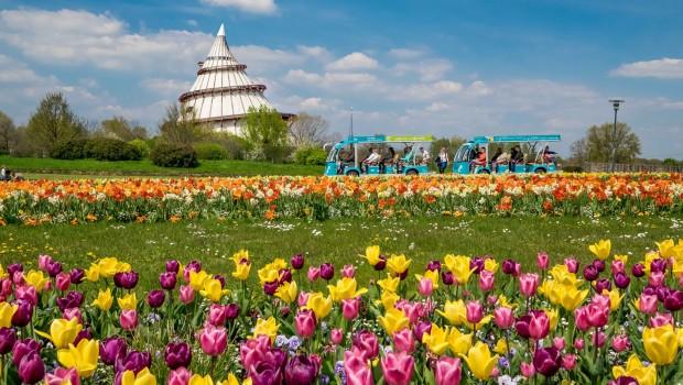 Elbauenpark Ostern Tulpen