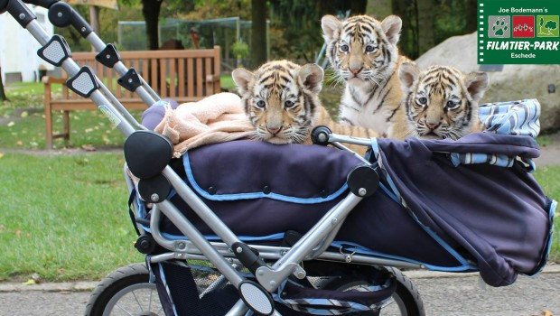Filmtier-Park Eschede Tiger