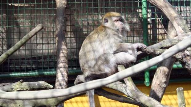 Tierpark Göppingen Affe