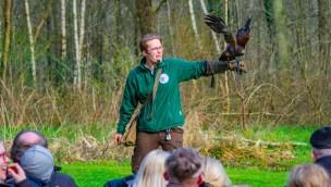 Wildpark Müden präsentiert 2019 wieder Greifvogel-Flugschau mit Uhu, Bussard und Co.