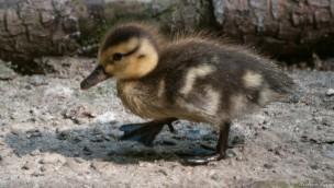 Zooschule Heidelberg – Ferienprogramm zu Ostern 2019 bekanntgegeben