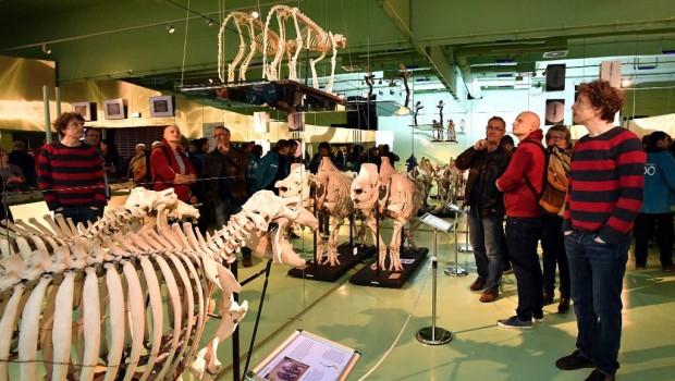 Zoo Rostock Ausstellung Fortbewegung