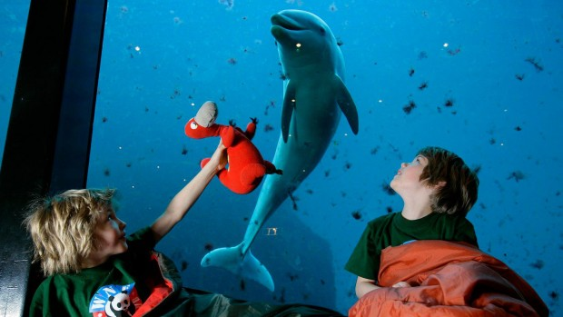 Dolfinarium Harderwijk Kinder mit Delfin