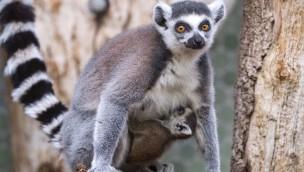 Tierisch viel Nachwuchs im Tierpark Hellabrunn zur Saison 2019