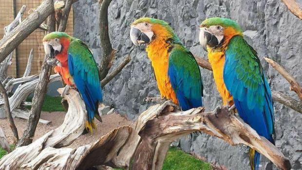 Erlebnistierpark Memleben Rio und ihre Freunde Papageien Lucy, Oscar und Pepito