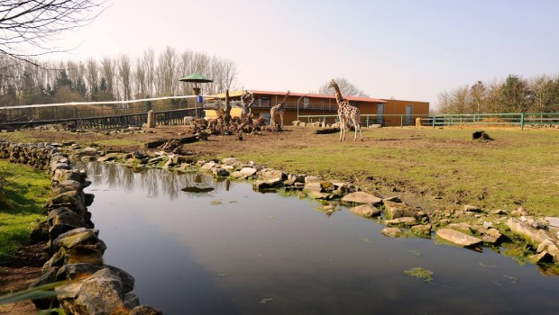 Pakawi Park Giraffen (Olmense Zoo)
