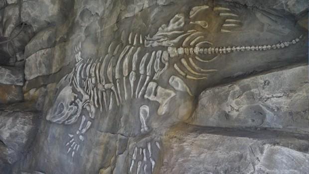 Plopsaland De Panne Dino Splash Umthematisierung Fossil