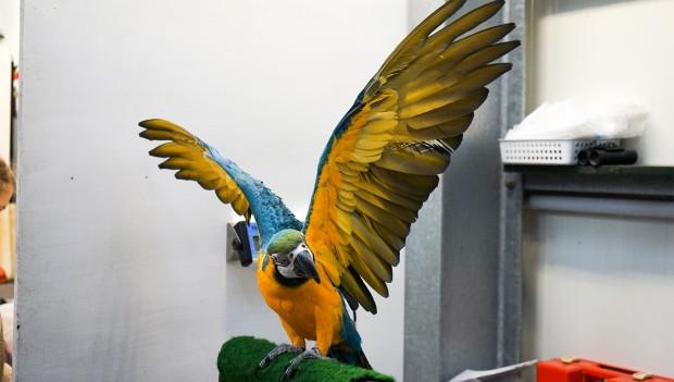(Foto: Weltvogelpark)